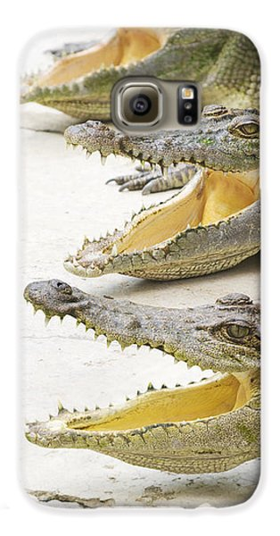 Crocodile Choir Galaxy S6 Case by Jorgo Photography - Wall Art Gallery