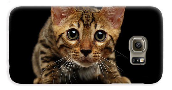 Crouching Bengal Kitty On Black  Galaxy S6 Case by Sergey Taran