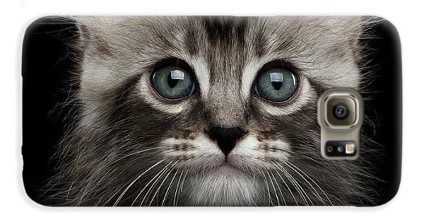 Cute American Curl Kitten With Twisted Ears Isolated Black Background Galaxy S6 Case by Sergey Taran