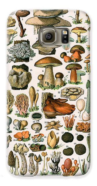 Decorative Print Of Champignons By Demoulin Galaxy S6 Case by American School