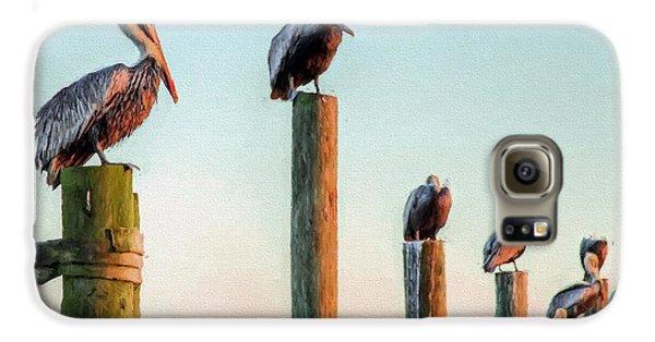 Destin Pelicans-the Peanut Gallery Galaxy S6 Case by JC Findley