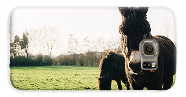 Donkey And Pony Galaxy S6 Case by Pati Photography