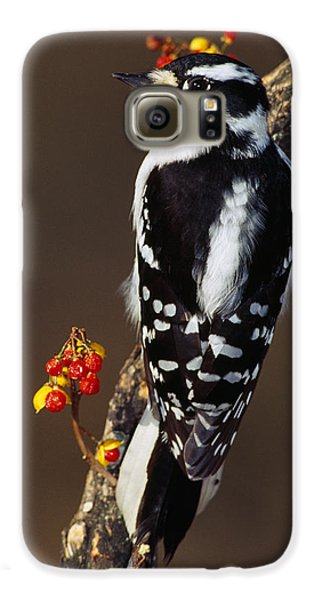 Downy Woodpecker On Tree Branch Galaxy S6 Case by Panoramic Images