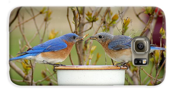 Early Bird Breakfast For Two Galaxy S6 Case by Bill Pevlor