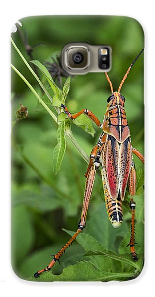Eastern Lubber Grasshopper  Galaxy S6 Case by Saija  Lehtonen