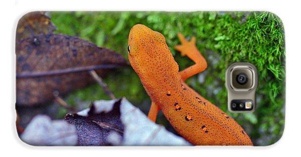 Eastern Newt Galaxy S6 Case by David Rucker