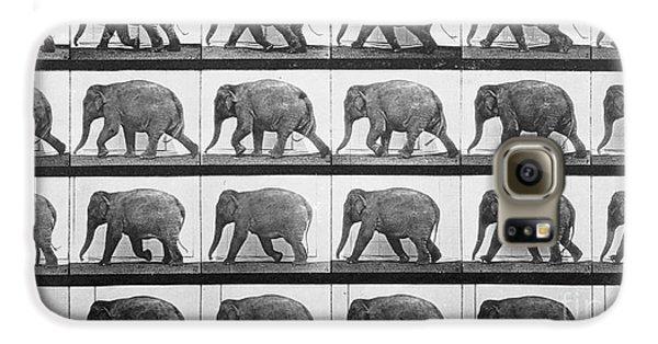 Elephant Walking Galaxy S6 Case by Eadweard Muybridge