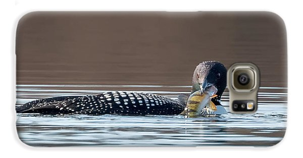 Feeding Common Loon Square Galaxy S6 Case by Bill Wakeley