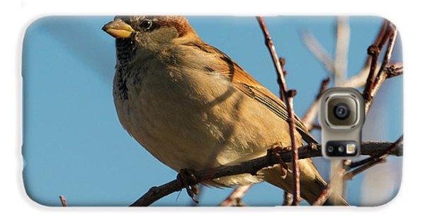 Female House Sparrow Galaxy S6 Case by Mike Dawson