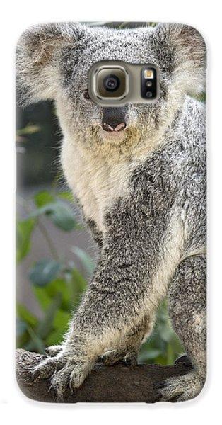 Female Koala Galaxy S6 Case by Jamie Pham