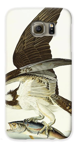 Fish Hawk Galaxy S6 Case by John James Audubon