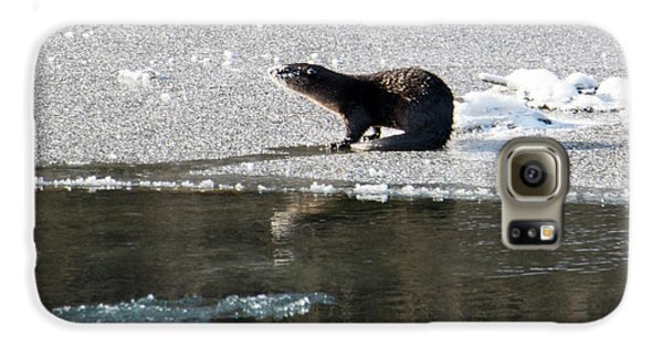 Frosty River Otter  Galaxy S6 Case by Mike Dawson