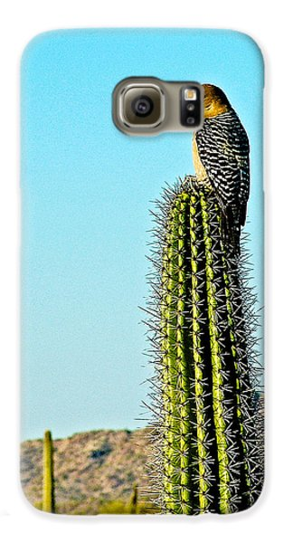 Gila Woodpecker On Saguaro In Organ Pipe Cactus National Monument-arizona Galaxy S6 Case by Ruth Hager