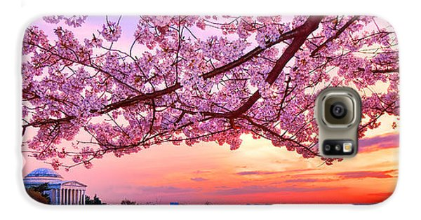Glorious Sunset Over Cherry Tree At The Jefferson Memorial  Galaxy S6 Case by Olivier Le Queinec
