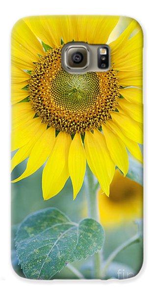 Golden Sunflower Galaxy S6 Case by Tim Gainey