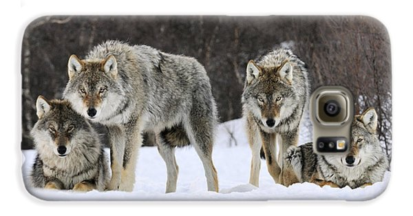 Gray Wolves Norway Galaxy S6 Case by Jasper Doest