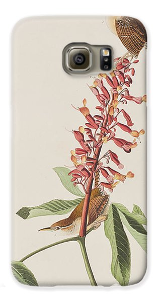 Great Carolina Wren Galaxy S6 Case by John James Audubon