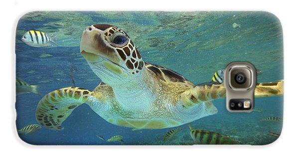 Green Sea Turtle Chelonia Mydas Galaxy S6 Case by Tim Fitzharris