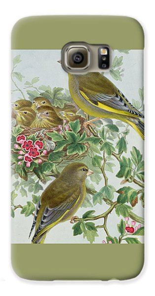 Greenfinch Galaxy S6 Case by John Gould