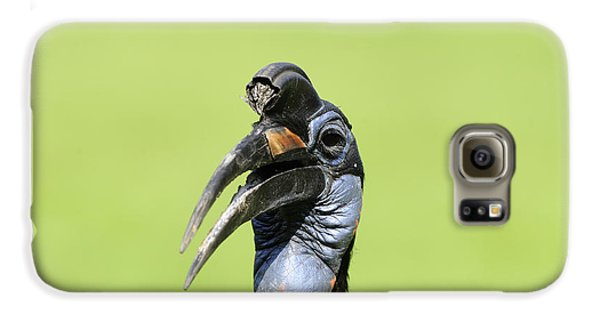 Ground Hornbill Galaxy S6 Case by David & Micha Sheldon