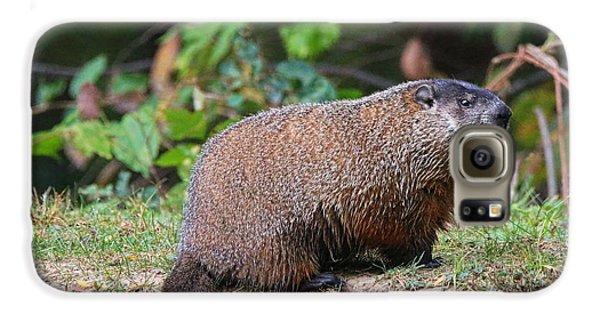 Groundhog  0590 Galaxy S6 Case by Jack Schultz