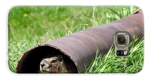 Groundhog In A Pipe Galaxy S6 Case by Will Borden