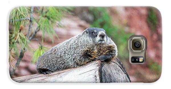 Groundhog On A Log Galaxy S6 Case by Jess Kraft
