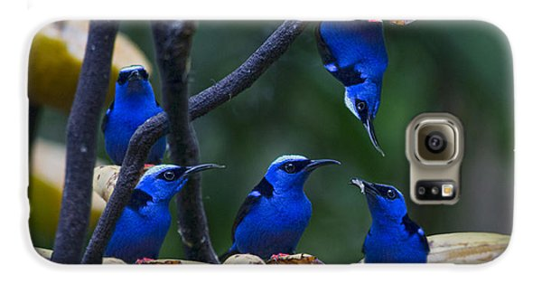 Honeycreeper Galaxy S6 Case by Betsy Knapp