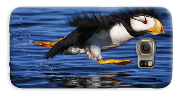 Horned Puffin  Fratercula Corniculata Galaxy S6 Case by Marion Owen