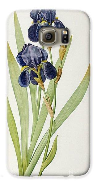 Iris Germanica Galaxy S6 Case by Pierre Joseph Redoute