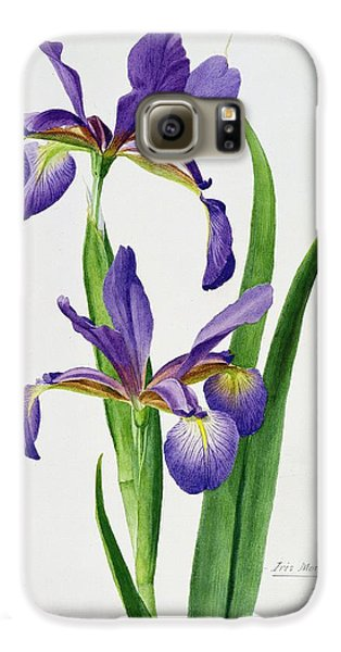 Iris Monspur Galaxy S6 Case by Anonymous