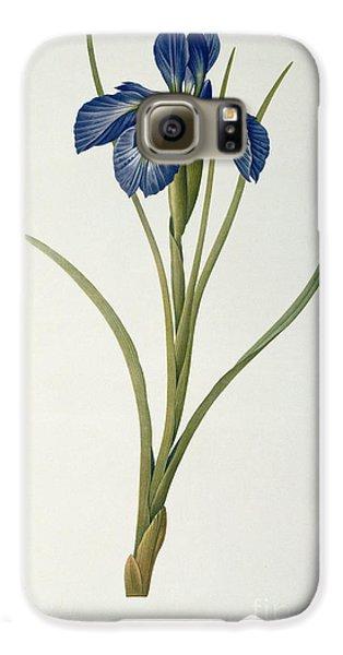 Iris Xyphioides Galaxy S6 Case by Pierre Joseph Redoute