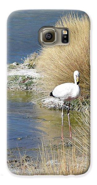 Juvenile Flamingo No. 64 Galaxy S6 Case by Sandy Taylor