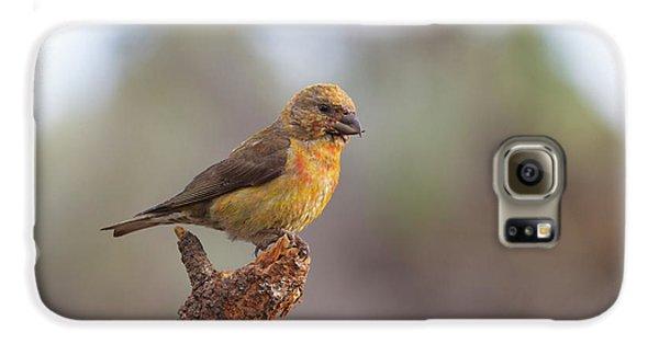 Juvenile Male Red Crossbill Galaxy S6 Case by Doug Lloyd
