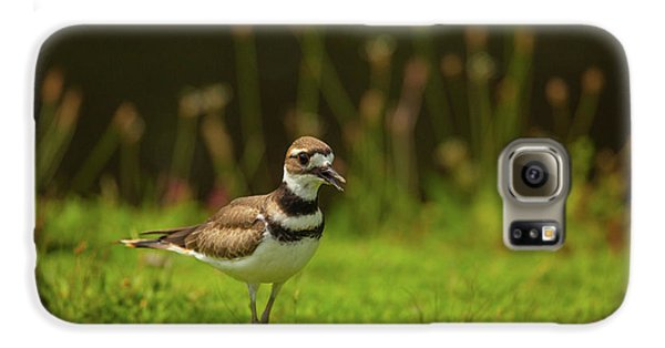 Killdeer Galaxy S6 Case by Karol Livote