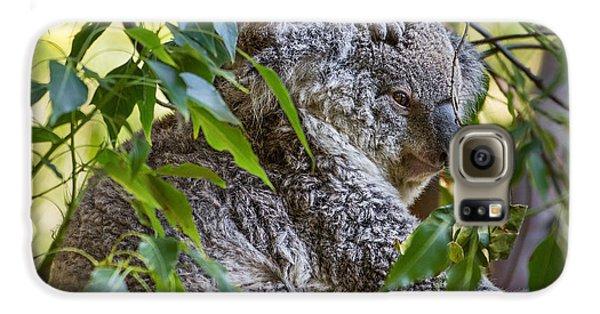 Koala Joey Galaxy S6 Case by Jamie Pham