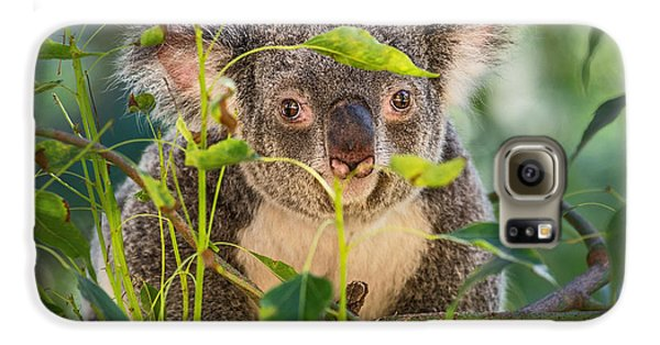 Koala Leaves Galaxy S6 Case by Jamie Pham