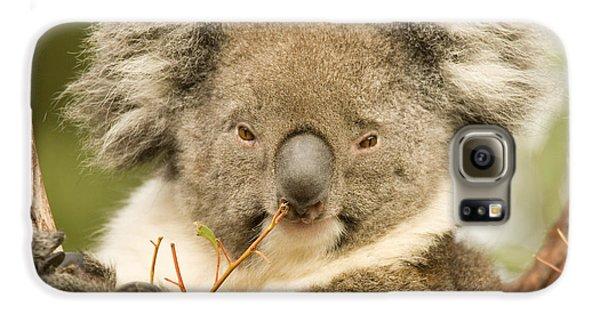 Koala Snack Galaxy S6 Case by Mike  Dawson