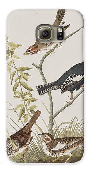 Lark Finch Prairie Finch Brown Song Sparrow Galaxy S6 Case by John James Audubon