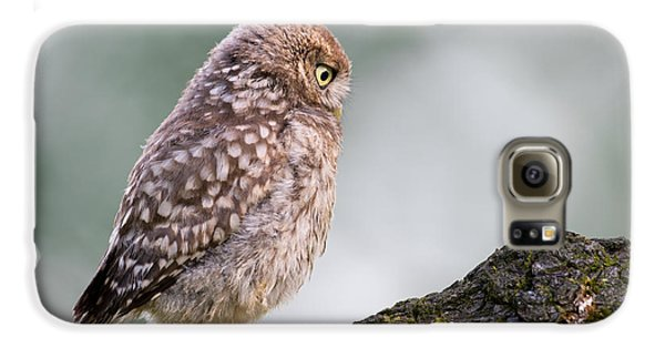 Little Owl Chick Practising Hunting Skills Galaxy S6 Case by Roeselien Raimond