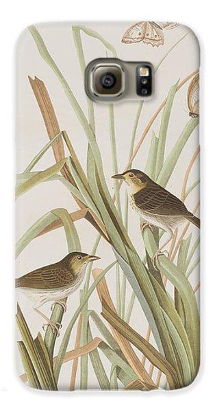 Macgillivray's Finch  Galaxy S6 Case by John James Audubon