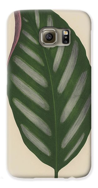 Maranta Porteana Galaxy S6 Case by English School