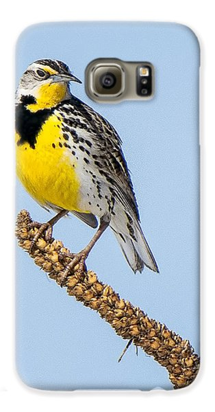Meadowlark On Mullein Stalk Galaxy S6 Case by Stephen Johnson