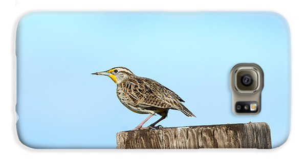 Meadowlark Roost Galaxy S6 Case by Mike Dawson
