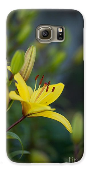 Morning Lily Galaxy S6 Case by Mike Reid