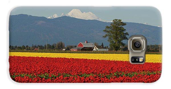 Mount Baker Skagit Valley Tulip Festival Barn Galaxy S6 Case by Mike Reid