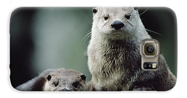 North American River Otter Lontra Galaxy S6 Case by Gerry Ellis