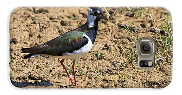 Northern Lapwing Galaxy S6 Case by Louise Heusinkveld