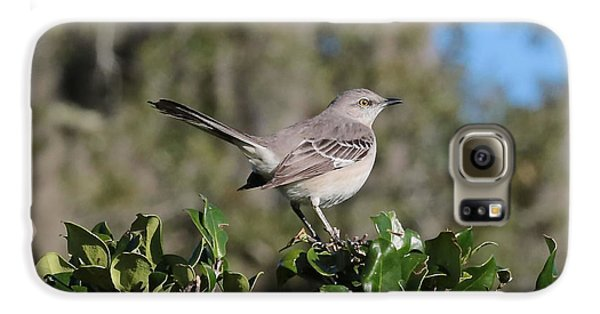 Northern Mockingbird Galaxy S6 Case by Carol Groenen