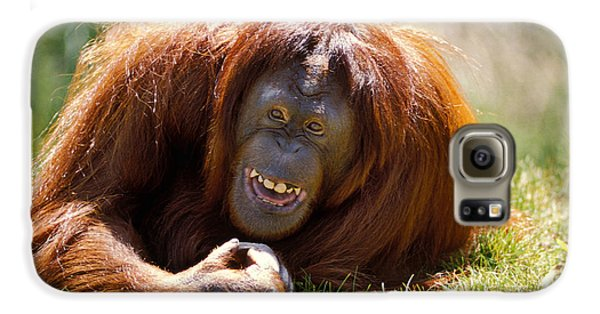 Orangutan In The Grass Galaxy S6 Case by Garry Gay